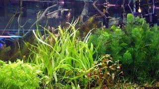 Запуск аквариума -  просто и доступно - Часть 1(Часть 2 http://www.youtube.com/watch?v=Vorg52fMuMw Аквариумные тропические рыбы ..., 2015-09-14T01:50:03.000Z)