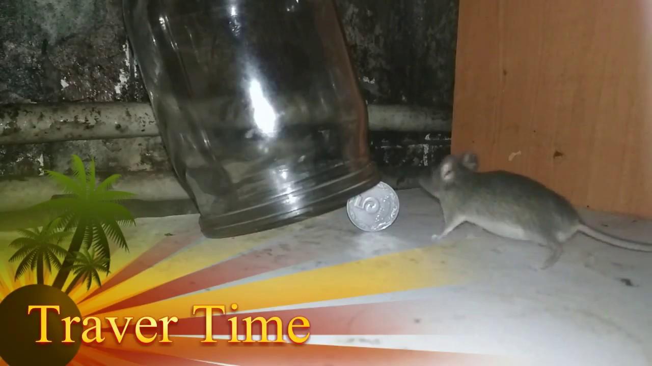 ловушка мышь
