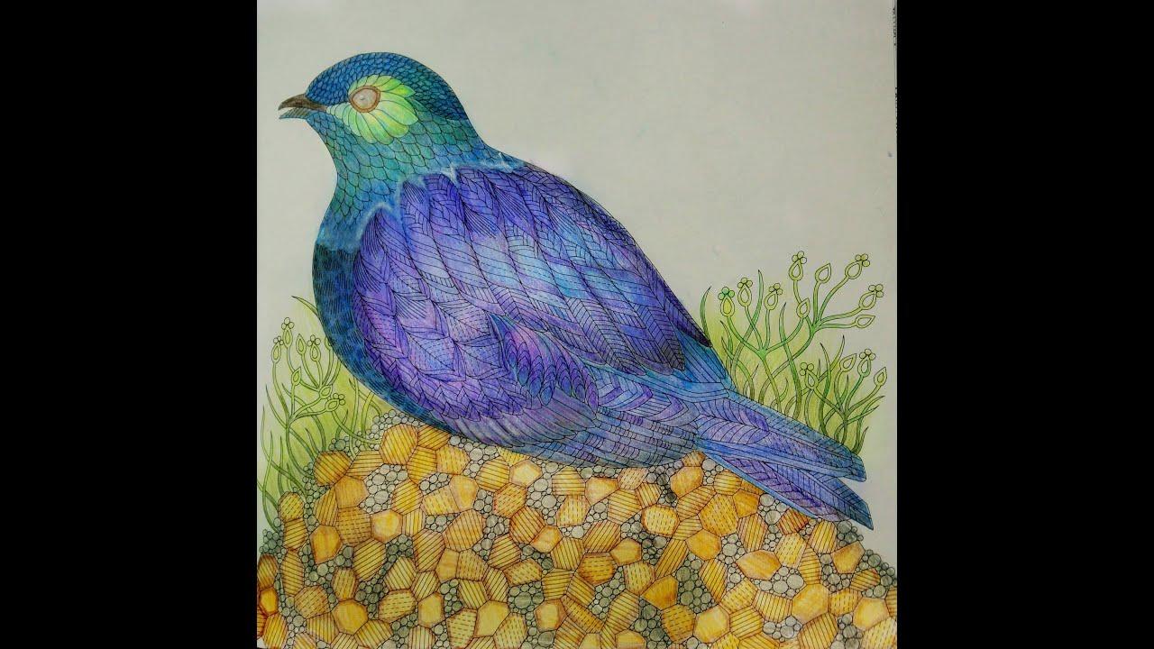 Millie Marottas Wild Savannah Bird Colouring TimeLapse