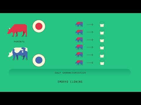 modern-cloning-techniques- -genetics- -biology