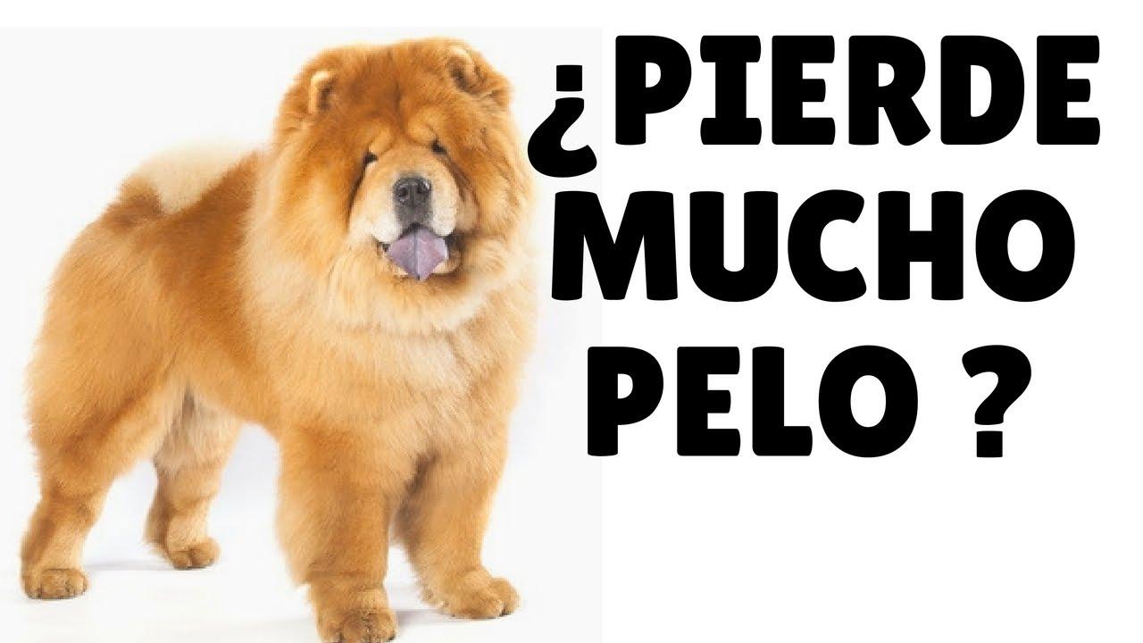 Como evitar la caida de pelo en los perros 10 secretos - Es malo banar mucho a los perros ...