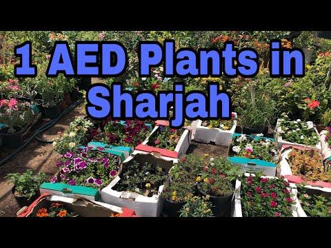 Plant Nursery In Sharjah, Dubai UAE Gardening And Landscping