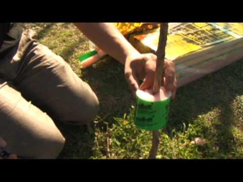 Control de hormigas funnydog tv for Como acabar con las hormigas del jardin