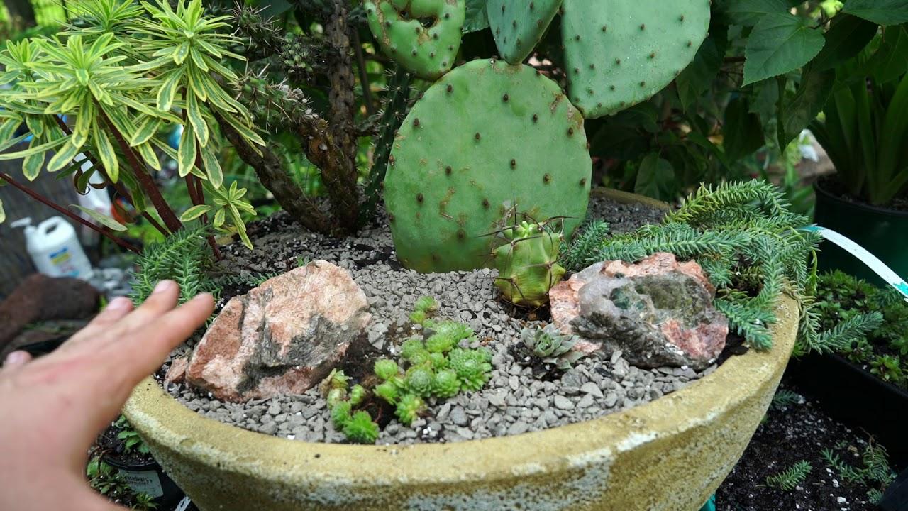 Hardy Succulent Cactus Planter Making A Succulent Container