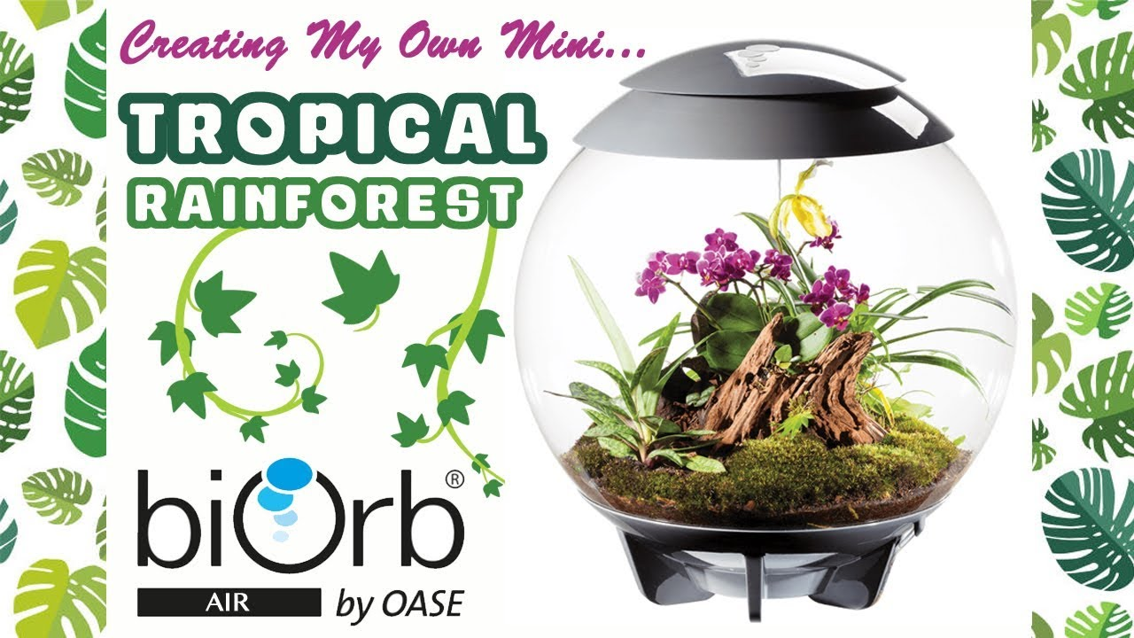 Creating My Own Mini Tropical Rainforest Planting Up My Biorb