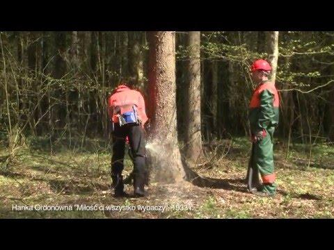 Spór o wycinanie drzew w Puszczy Białowieskiej