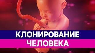 КЛОНИРОВАНИЕ ЛЮДЕЙ. Чем опасно клонирование человека и клонирование животных?