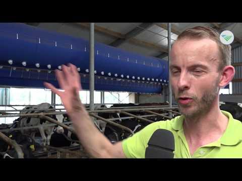 TV: Koeien Houden Hoofd Koel Met Airco