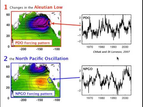 North Pacific Gyre Oscillation (NPGO): links ocean climate and ecosystem change