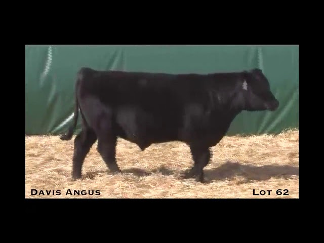 Davis Angus Lot 62