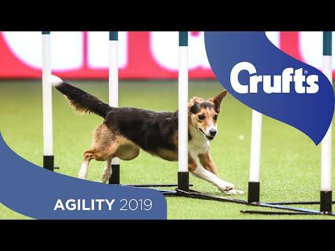 Agility Singles Heat – Small | Crufts 2019