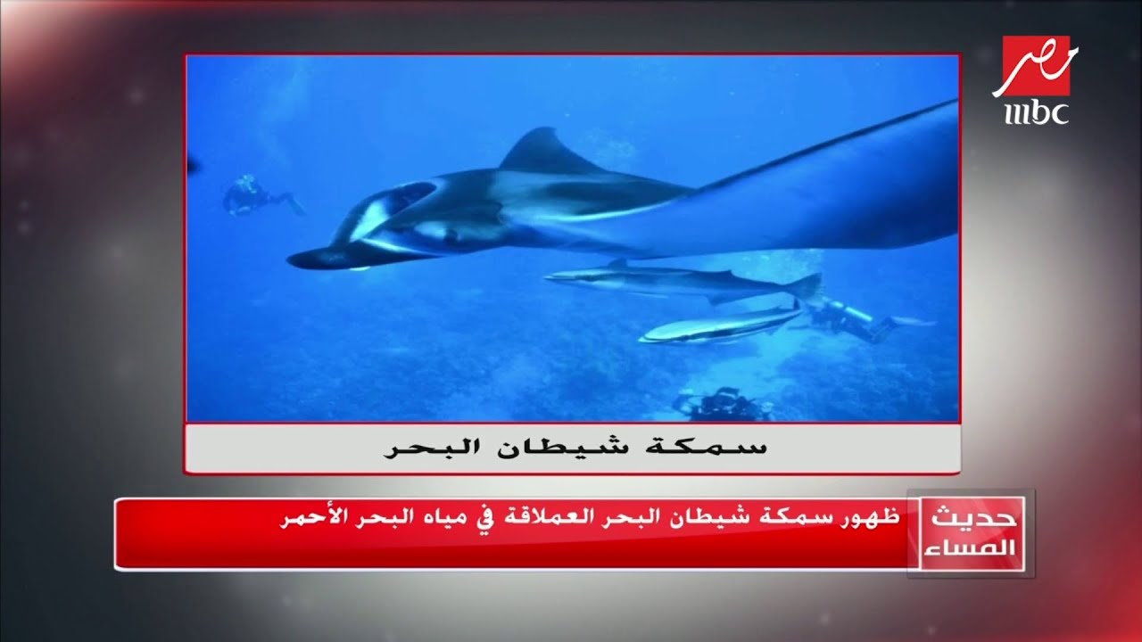 رئيس جمعية الإنقاذ البحري يكشف سر ظهور سمكة شيطان البحر