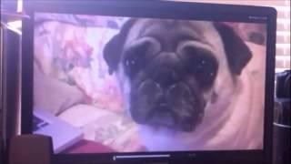 The Pug Files