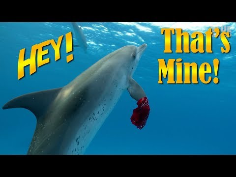 Playing Keep Away with Dolphins! | JONATHAN BIRD'S BLUE WORLD