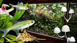 new-nano-fish-mini-orchids-vivarium-mushrooms
