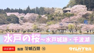 今回は、茨城の桜の名所を巡るシリーズです。まずは水戸市の旧茨城県庁...