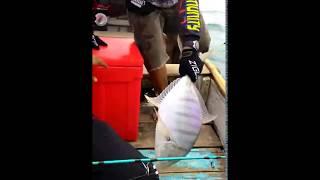 Wow!! begini tarikannya ketika umpan disambar ikan besar