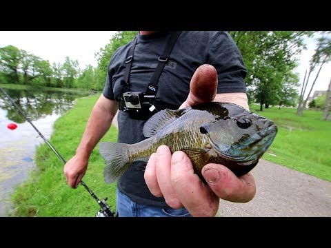 Bluegill Fishing with a Baitcaster