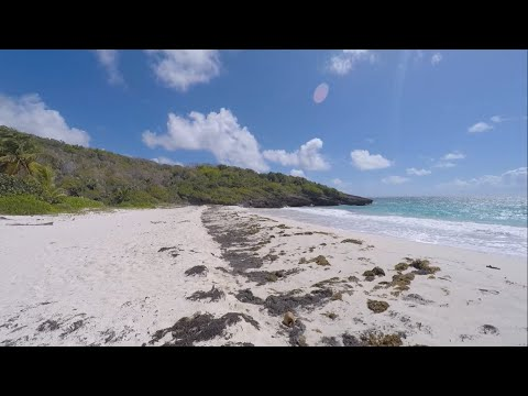 Swimming and Snorkeling In Vieques, Puerto Rico