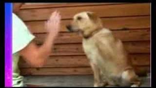 Gatos y perros locos