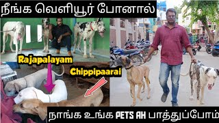 Great Dane Colors | Dogs Boarding | Rajapalayam | Chippipaarai | Purasai Naveen | Jay Vlogs