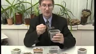 Народное средство для снижения аппетита. Чай для похудения