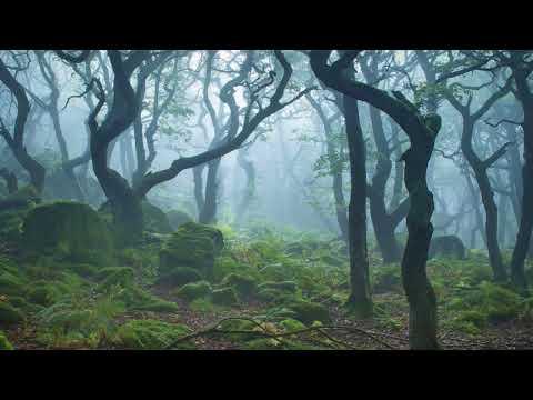 "Jan Jelinek - Ending Sequence from ""Morphing Leadgitarre Rückwärts"" (10 Minute Version)"