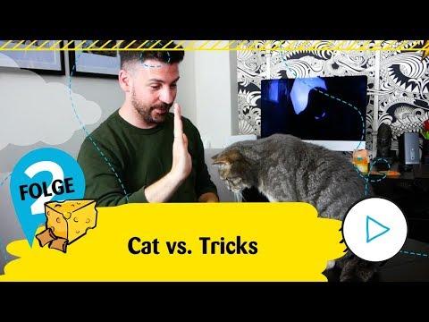 Dreamies präsentiert Cat vs. Tricks - Folge 2