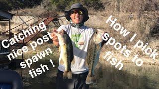 Pre-Fishing for THSBA Lake Whitney 2018