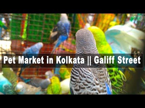 Pet Market in Kolkata    Galiff Street