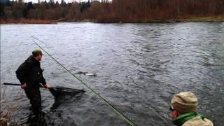 Oregon Steelhead Fish of a Thousand Casts- Winter Spey Addiction