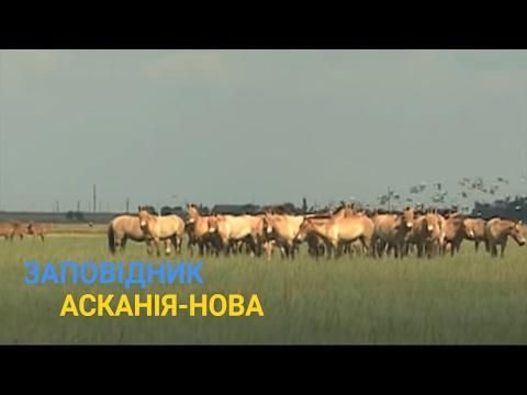 Степовий заповідник Асканія - Нова - Справжнє українське сафарі - Україна вражає
