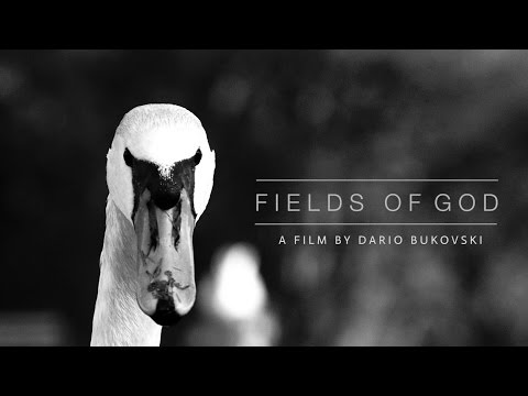 Fields of God