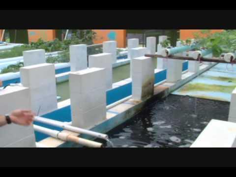 Malawi Fish Farm Project - Intro