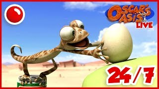 BACK TO SCHOOL Oscar's Oasis - HD Live Stream Full Episodes 24/7 🔴