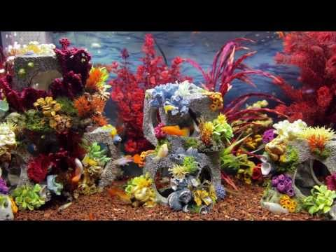 Colorful Aquarium Screensaver -   Fish Tank