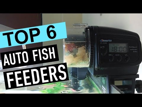 BEST 6: Auto Fish Feeders