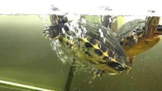 Turtle Bubble Bath