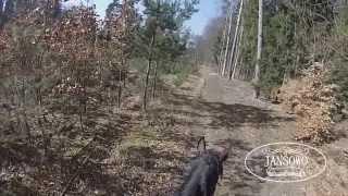 Marcowa przejażdżka konno po lesie