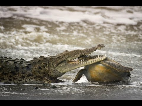 World's Deadliest Animals  Costa Rica  Wild Nature  National Geographic