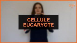 Biologie - Cellule Eucaryote (2 signes)