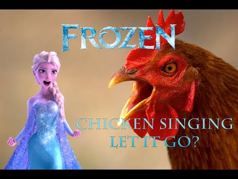 Chicken Singing