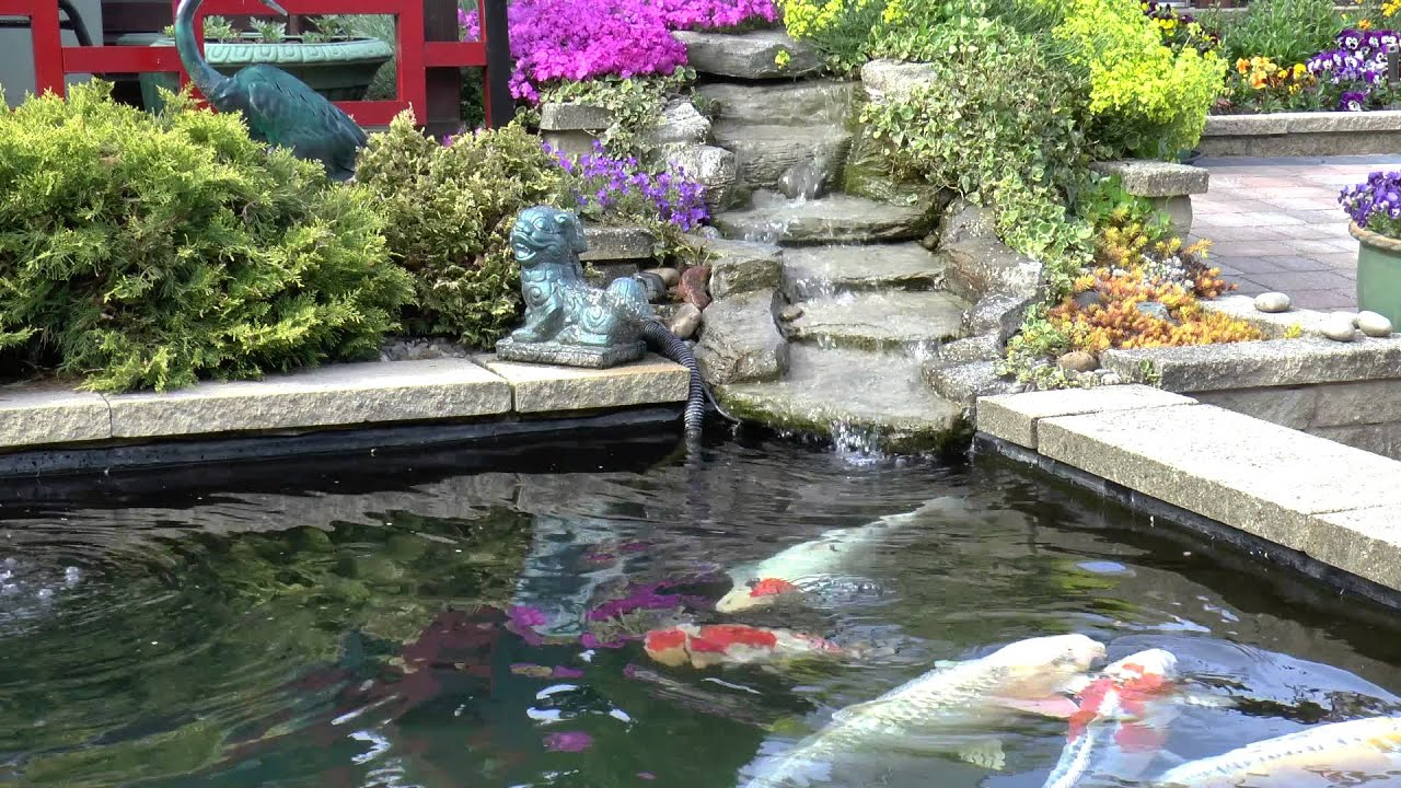 Koi carp pond youtube for Keeping koi carp in a pond