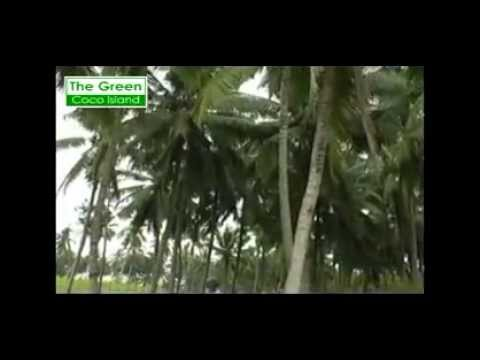Profile CV. Sumber Rejeki (Member of: The Green Coco Island)