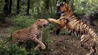 Thế giới động vật 2019 HD ! Thật không may cho báo con