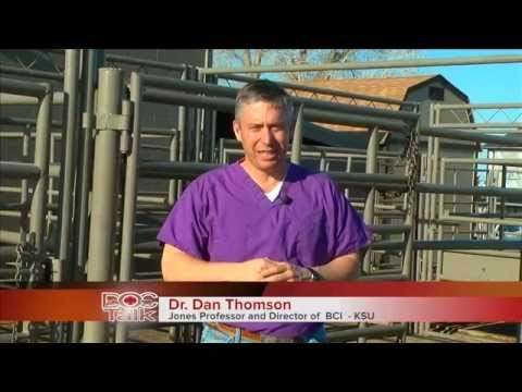 DocTalk Show 116 Veterinary Practices of the Future
