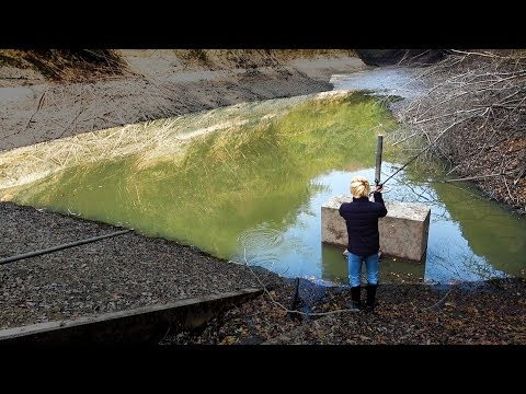 外来魚全滅。水を抜かれた池で釣りをしたら大惨事だった...【衝撃映像】