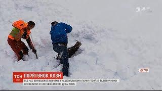 Порятунок на австрійській залізниці: працівник потягу витягнув з-під снігу козулю