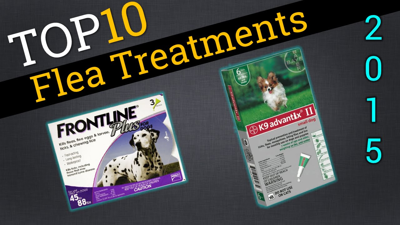 Most Effective Flea Treatment For Cats And Dogs