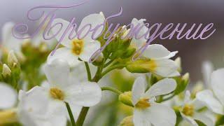 Пробуждение - Муром, Спасский монастырь, 1 мая 2020 Awakening - Murom, May 1, 2020